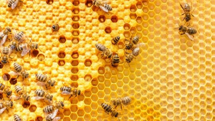 imagen de propiedades curativas de la miel